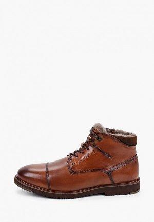 Ботинки Salamander. Цвет: коричневый