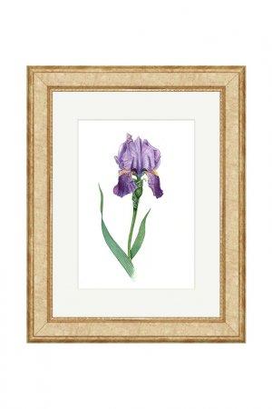 Картина Пикардия OLGA GLAZUNOVA. Цвет: фиолетовый